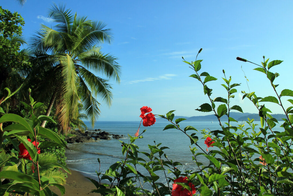 View to Drake Bay, Osa Peninsula, Costa Rica with beautiful red flowers.